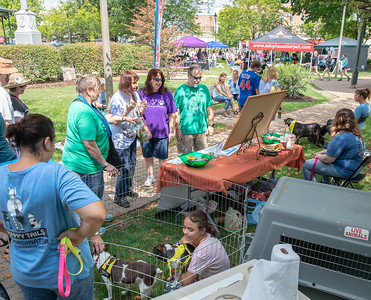 Area residents turned out in large numbers Sunday, August 19, 2018 for the 4th annual Bark-a-Paw-Looza held at the Woodstock Square.  This annual Woodstock fundraiser helps to support local families in need with caring for their furry family members.   KKoontz – for Shaw Media