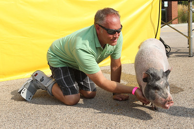 "Candace H. Johnson-For Shaw Media Pastor Dr.Erik Holm with Wildwood Presbyterian Church kneels down as he pets Leo, the pig, after kissing him for winning the Grayslake Rotary's ""Kiss the Pig,"" contest during Grayslake Summer Days in downtown Grayslake. (8/18/18)"