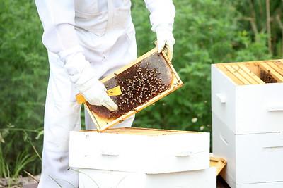 Glen Ellyn Beekeeping