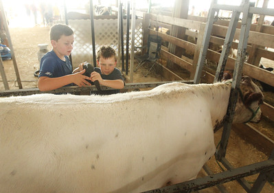 Candace H. Johnson-For Shaw Media Nixon Gross and his brother, Quincy, 8, both of London, Ohio blow dry Rosie, a crossbred heifer, during the Lake County Fair at the Lake County Fairgrounds in Grayslake. The heifer is owed by Ryann Ray and kept on the Beelow Farm in Mundelein. (7/25-7/28/19)