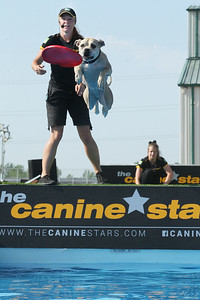 Candace H. Johnson-For Shaw Media Keri Caraher, of Fort Collins, Colo., dog trainer and owner, watches one of her dogs named, Coconut, catch a frisbee as he jumps in the water at the Canine Stars Stunt Dog Show during the Lake County Fair at the Lake County Fairgrounds in Grayslake. (7/25-7/28/19)