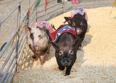 Candace H. Johnson-For Shaw Media Little pigs take off running during a Ham Bone Express Pig Race at the Lake County Fair at the Lake County Fairgrounds in Grayslake. (7/25-7/28/19)