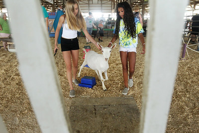 Candace H. Johnson-For Shaw Media Caity Dodson, and Arielle Smith, both 12, of Mundelein have fun pulling a goat through the Goat Obstacle Course during the Lake County Fair at the Lake County Fairgrounds in Grayslake. (7/25-7/28/19)