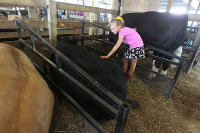 Candace H. Johnson-For Shaw Media Addison Falk, 7, of Salem, Wis., pets some cross breed cows during the Lake County Fair at the Lake County Fairgrounds in Grayslake. (7/25-7/28/19)