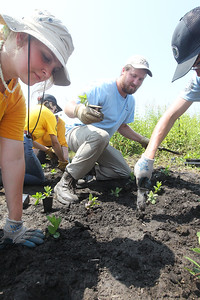 Candace H. Johnson-For Shaw Media Grace Stang, 16, of Ingleside and Wyatt Nusser, 23, of Johnsburg along with others plant Culver's Root plants during a Youth Conservation Corps 2019 project at the Rollins Savanna Native Seed Nursery on Washington Street in Grayslake. (7/25/19)