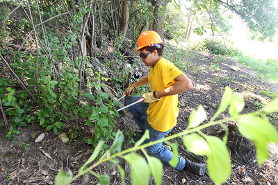 Candace H. Johnson-For Shaw Media Spencer Steeves, 16, of Lake Zurich helps to cut down buckthorn trees during a Youth Conservation Corps 2019 project at the Nippersink Forest Preserve on Route 120 in Round Lake. (7/25/19)