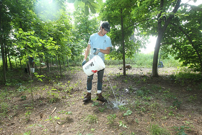 Candace H. Johnson-For Shaw Media Martin Brannaman, 19, of Libertyville waters native plants newly planted during a Youth Conservation Corps 2019 project near the Rollins Savanna Native Seed Nursery on Washington Street in Grayslake. (7/25/19)