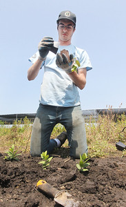Candace H. Johnson-For Shaw Media Martin Brannaman, 19, of Libertyville plants a Culver's Root plant during a Youth Conservation Corps 2019 project at the Rollins Savanna Native Seed Nursery on Washington Street in Grayslake. (7/25/19)