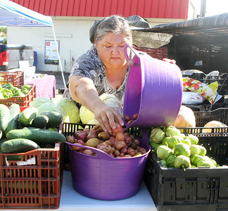 Candace H. Johnson-For Shaw Media Lita Vargas, of Wonder Lake with Rancho Los Compadres, puts out baby red potatoes for sale at the Fox Lake Farmers Market on School Court in Fox Lake. The market runs on Tuesday nights from 4 - 8:00 pm. through September. (8/20/19)