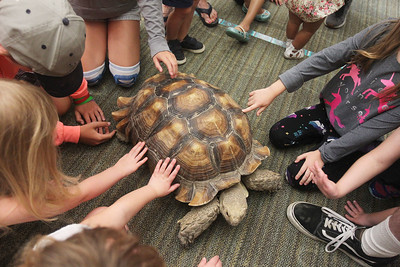 Candace H. Johnson-For Shaw Media Children touch an African tortoise during the Dave DiNaso's Traveling World of Reptiles show at the Fox Lake District Library. (8/24/19)
