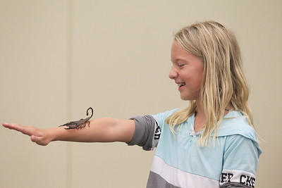 Candace H. Johnson-For Shaw Media Hannah Jones, 9, of Round Lake volunteers to let a flat rock scorpion named, Elvira, sit on her arm during the Dave DiNaso's Traveling World of Reptiles show at the Fox Lake District Library. (8/24/19)