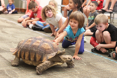 Candace H. Johnson-For Shaw Media Emily Molnar, 5, of Ingleside touches an African tortoise during the Dave DiNaso's Traveling World of Reptiles show at the Fox Lake District Library. (8/24/19)