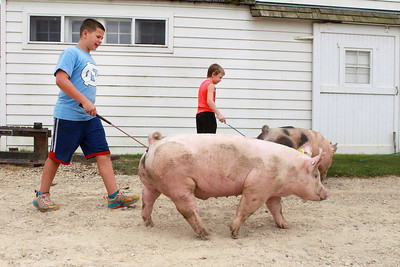 Candace H. Johnson-For Shaw Media Jackson Yarc, 10, and Quincy Gross, 9, of London, Ohio walk some pigs at Yarc Farms in Libertyville. (8/1/20)