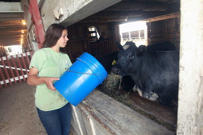 Candace H. Johnson-For Shaw Media Isabella Yarc, 13, feeds her steer named, Levi, at Yarc Farms in Libertyville. Levi weighed 1300 lbs. and was sold during the 2020 Lake County Fair Virtual Livestock Auction. (8/1/20)