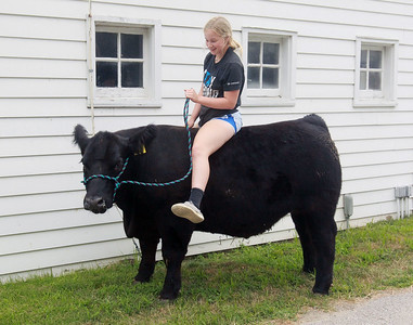 Candace H. Johnson-For Shaw Media Reagan Gross, 15, of London Ohio sits on her steer named, Pretty Boy, at Yarc Farms in Libertyville. Pretty Boy weighed 1333 lbs. and was sold during the 2020 Lake County Fair Virtual Livestock Auction. (8/1/20)