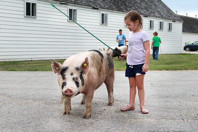 Candace H. Johnson-For Shaw Media Lucy Yarc, 4, tries to walk with one of the pigs at Yarc Farms in Libertyville. Behind Lucy stands her brothers, Jackson, 10, and Owen, 8. (8/1/20)