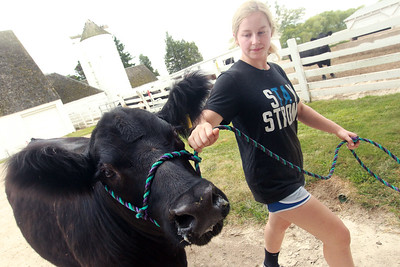 Candace H. Johnson-For Shaw Media Reagan Gross, 15, of London Ohio walks her steer named, Pretty Boy, back to the barn at Yarc Farms in Libertyville. Pretty Boy weighed 1333 lbs. and was sold during the 2020 Lake County Fair Virtual Livestock Auction. (8/1/20)