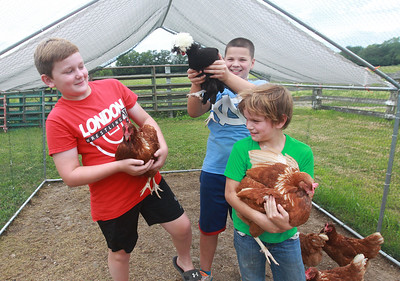 Candace H. Johnson-For Shaw Media Jackson Yarc, 10, and his brother, Owen, 8, have fun holding chickens with Nixon Gross, 11, of London, Ohio (on left) at Yarc Farms in Libertyville. (8/1/20)