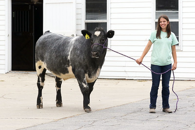 Candace H. Johnson-For Shaw Media Isabella Yarc, 13, with her steer named, Levi, at Yarc Farms in Libertyville. Levi weighed 1300 lbs. and was sold during the 2020 Lake County Fair Virtual Livestock Auction. Isabella is a member of the Country Bumpkins 4-H Club. (8/1/20)