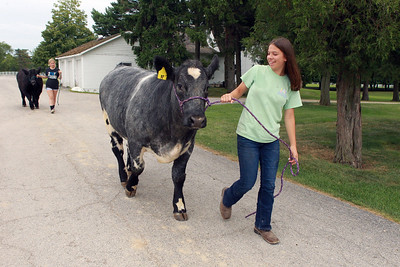 Candace H. Johnson-For Shaw Media Isabella Yarc, 13, (in front) walks her steer named, Levi, with Reagan Gross, 15, of London, Ohio behind her walking her steer named, Pretty Boy, at Yarc Farms in Libertyville. Both girls sold their steers at the 2020 Lake County Fair Virtual Livestock Auction on August 1st.(8/1/20)
