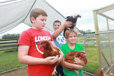 Candace H. Johnson-For Shaw Media Jackson Yarc, 10, has some fun as he tries to put a chicken on his brother, Owen's, 8, head as they stand next to Nixon Gross, 11, of London, Ohio (on left) at Yarc Farms in Libertyville. (8/1/20)