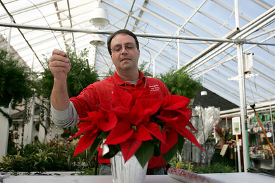 Monica Maschak - mmaschak@shawmedia.com Countryside Flower Shop Greenhouse Associate Michael Fedoran decorates poinsettias for the sales floor.