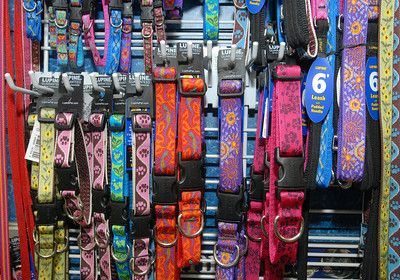 Critters Pet Shop in St. Charles has a variety of Lupine pet collars for pet gifts for Christmas. Staff photo by Bill Ackerman