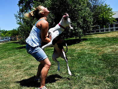 Josh Peckler - Jpeckler@shawmedia.com Bonnie Sutton plays with Penelope as she jumps in the air outside Huntley Animal House Shelter in June. Pit Bulls are known to be aggressive dogs but Huntley Animal House Shelter is setting out to prove that they can be great family pets.