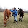 Sue Balla, who runs Casey's Safe Haven horse rescue at Field Of Dreams Farm, comforts Lola (left) as Dell looks on in a field on the Elburn property Tuesday. Lola was rescued from former owner Angela Beers.(Sandy Bressner photo)