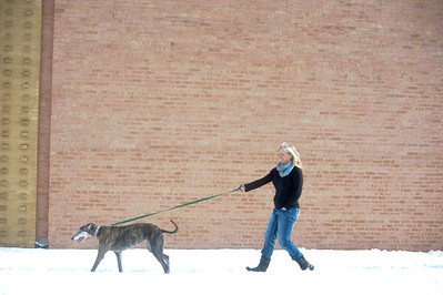 Jennifer Laughman, of Algonquin, Il, taked Millie the Greyhound  out for a walk during the 4 Greyhound Racers adoption drive at McHenry flea market  Sunday, December 22,2013.