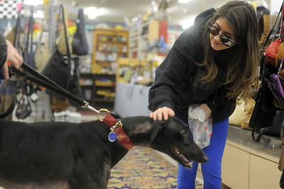Maddie Robles,13, of Fox Lake,Il., pets Joe the greyhound during the 4 Greyhound Racers adoption drive at McHenry Flea Market Sunday, December 22,2013.  The event was to spread awareness and about 4 Greyhound Racers which helps find Greyhounds homes.