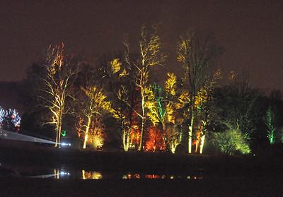 Morton Arboretum's Illumination: Tree Lights
