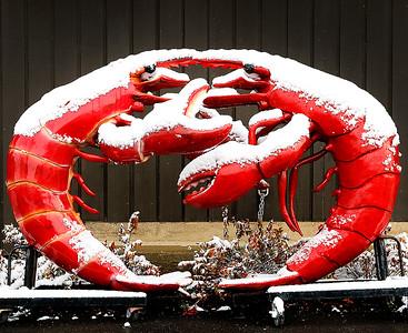 hcomm_adv_portable_crustaceans