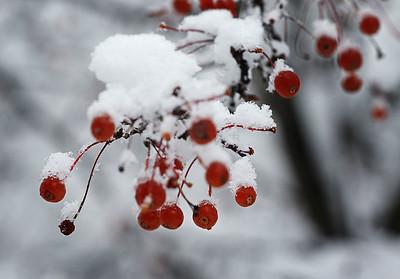 hnews_adv_tree_berries