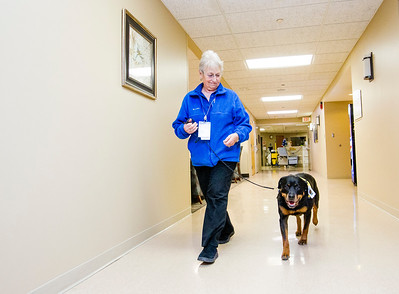 hnews_wed1221_therapy_dogs_01.jpg