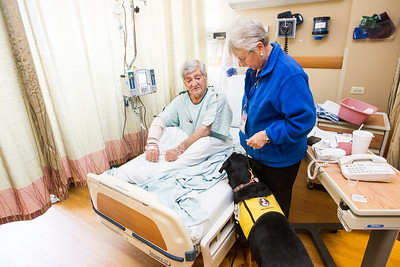 hnews_wed1221_therapy_dogs_02.jpg