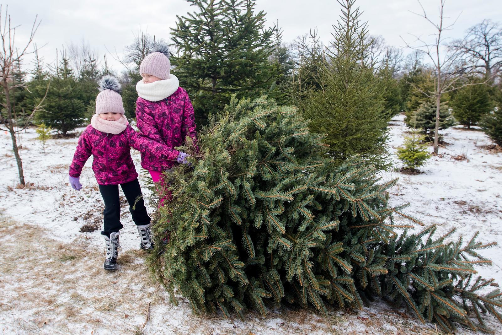 hnews_adv_Moehling's_Christmas_01.jpg