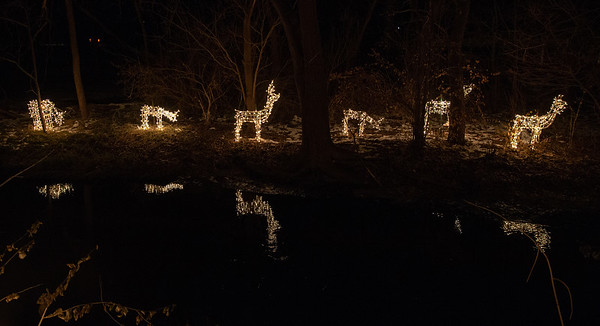 Lighted deer reflect in a creek alongside the homes of Ken Erikson and Peter Messman Thursday, December 6, 2018 in Bull Valley. The annual lighted display features over 200 lighted deer along Bull Valley Road. KKoontz – For Shaw Media