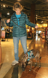 Candace H. Johnson-For Shaw Media Lisa Crowley, executive director and puppy raiser, of Canines 4 Comfort walks Ella, a one-and-a-half-year-old, rescue-mix through Bass Pro Shops in Gurnee Mills to introduce new environments to the dog for desensitization.(12/9/19)
