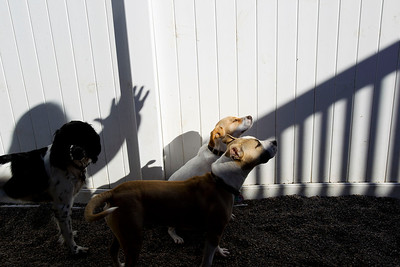 Jenny Kane - jkane@shawmedia.com Tammy McDonnell plays with Gypsy and other dogs using her shadow during play time at Camp Bow Wow.
