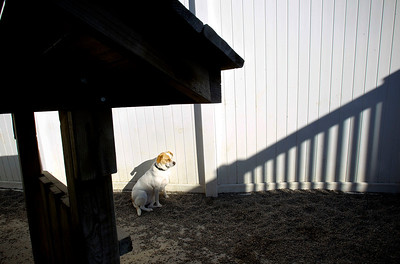 Jenny Kane - jkane@shawmedia.com Gypsy sits alone in the sun at Camp Bow Wow in McHenry.