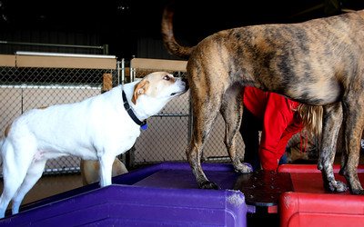 Jenny Kane - jkane@shawmedia.com Gypsy sniffs Gater during play time at Camp Bow Wow in McHenry.