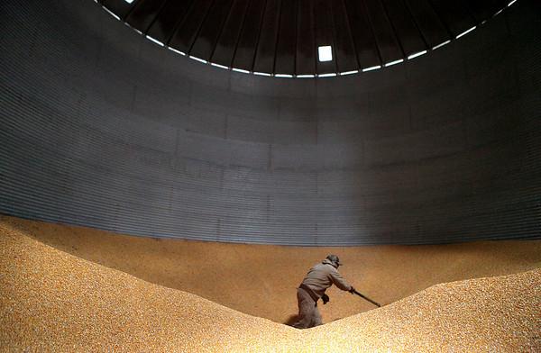Sandy Bressner - sbressner@shawmedia.com<br /> Joe White, president of the Kane County Farm Bureau, shovels corn in one of his silos at his Kaneville farm Tuesday morning.