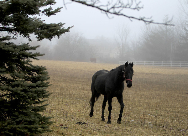 Sandy Bressner - sbressner@shawmedia.com<br /> A horse makes its way out of the fog off of Red Gate Road in St. Charles Thursday morning.