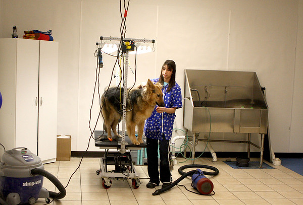 Sandy Bressner - sbressner@shawmedia.com<br /> Christina Wilson brushes out German shepherd Samantha in the back grooming area of her new Woof Beach location in Batavia Thursday. Christina runs the business with her husband, Eric.