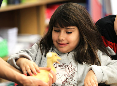 Monica Maschak - mmaschak@shawmedia.com Second grader Araceli Popoca-Leuth pets a duckling that was brought into the classroom at Locust Elementary School during Farm Day on Friday, February 22, 2013. Students spent the day learning about the shrinking culture of farming with field trips to local farms and fun farm activities.