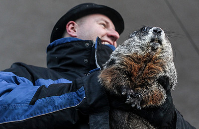 Sarah Nader- snader@shawmedia.com Handler Mark Szafran of Norridge presents Woodstock Willie to the large crowd that gathered Sunday morning on the Woodstock Square for the Groundhog Day Prognostication February 2, 2014. Willie prognosticated six more weeks of winter after seeing his shadow.