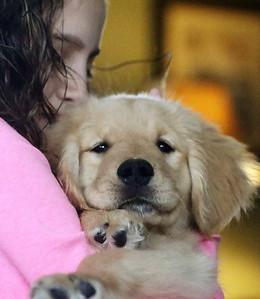 hPORT_adv_Puppy_Love_09