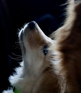 hPORT_adv_Puppy_Love_04