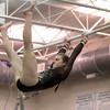 kspts_thu_204_batgymnastics8